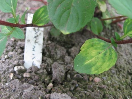 2009花 002.jpg