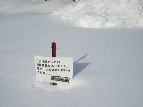 元営林局団地・牡丹園付近・川西 018.JPG