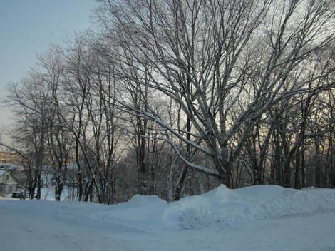 冬の朝・東4丁目 001.JPG