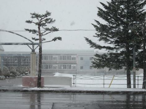 朝雪・7号線南・畑・タケノコ 002.JPG