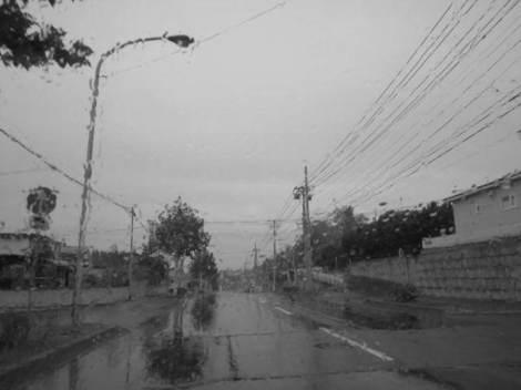 畑・雨 008.JPG