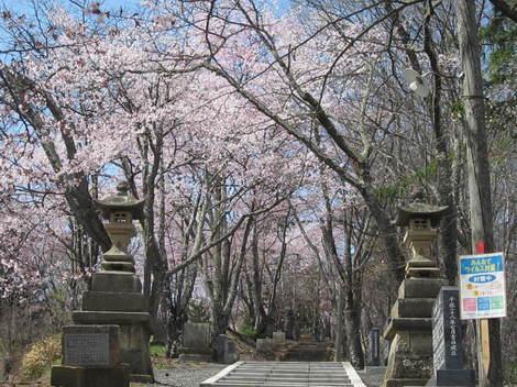 金比羅山桜・アイス 002.JPG