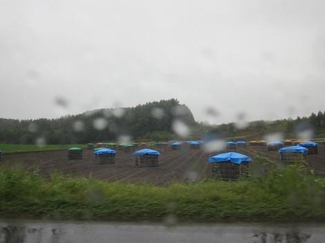 雨淵境野・緑のセンター 004 (2).JPG