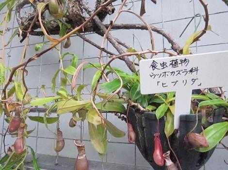 雨淵境野・緑のセンター 032.JPG