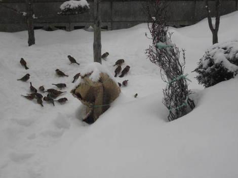 雪かき 003.JPG