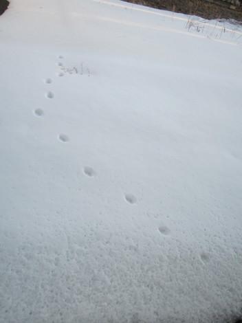 雪の足跡 004.JPG