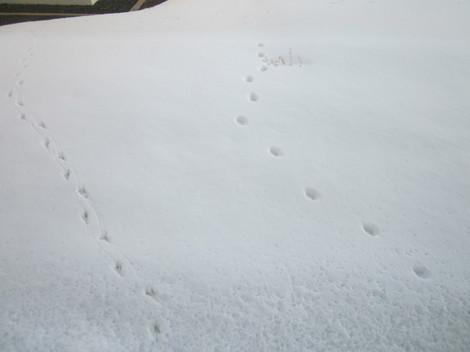 雪の足跡 005.JPG