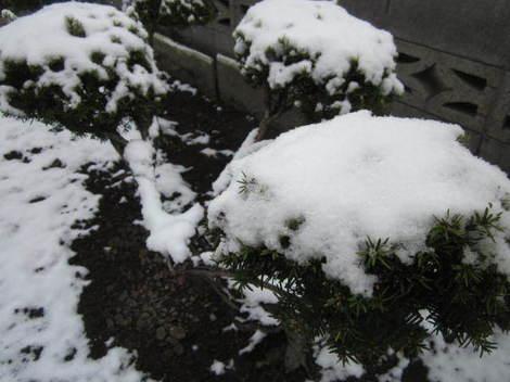 雪・タケノコ 007.JPG
